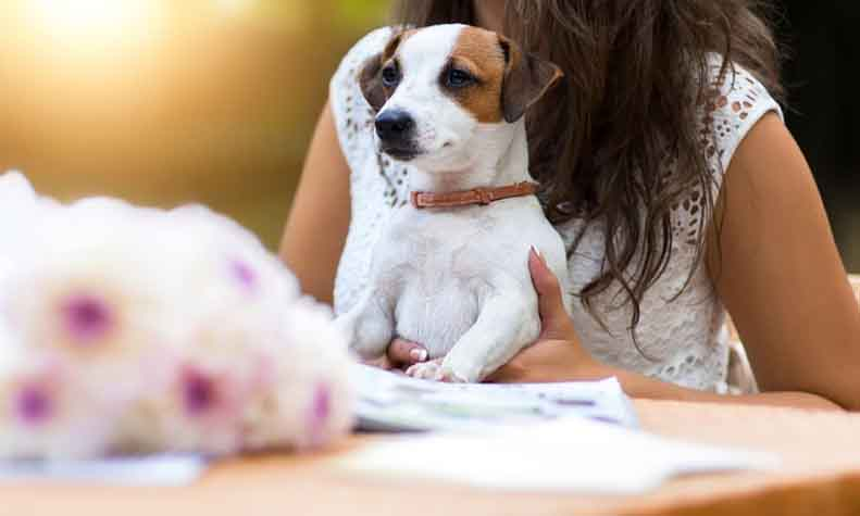 best-pet-friendly-cafes-in-gurgaon