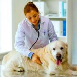 best-pet-clinics-in-gurgaon